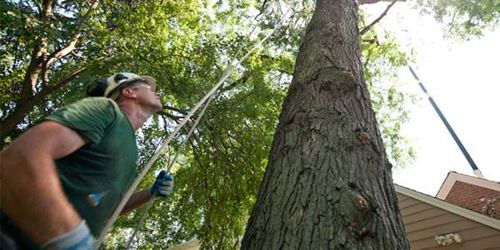 Residential Tree Care for Knoxville, TN