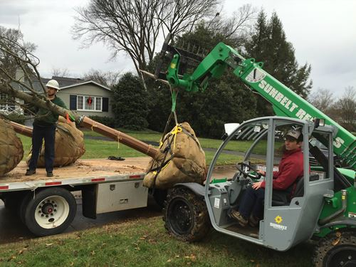 Tree Planting Services - Knoxville, TN
