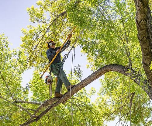 Tree Trimming and Pruning Knoxville, TN
